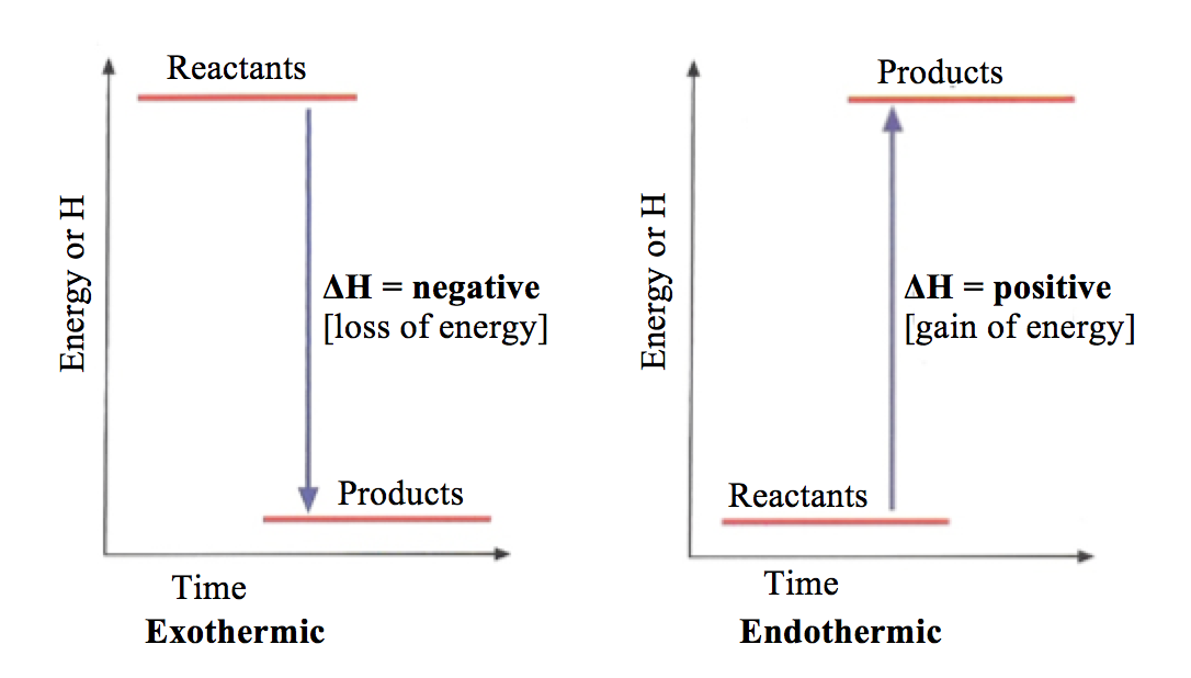 Endothermic And Exothermic Energy Diagram Electrical Work Wiring
